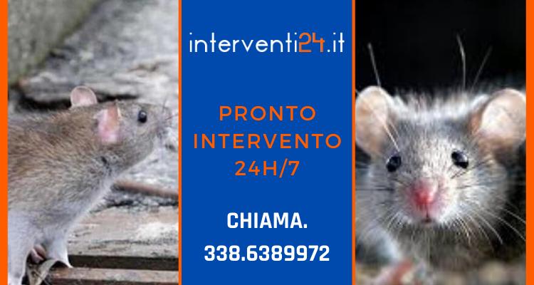 Disinfestazione da ratti a Milano